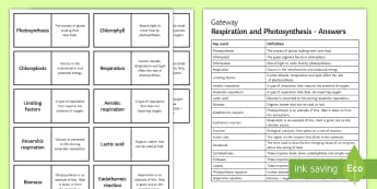 OCR Gateway Photosynthesis and Respiration Word Loops - Word Loops, photosynthesis, equations, limiting factors, aerobic respiration, anaerobic respiration,