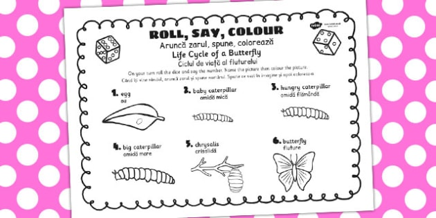 Life Cycle Of A Butterfly Roll Say Colour Romanian Translation
