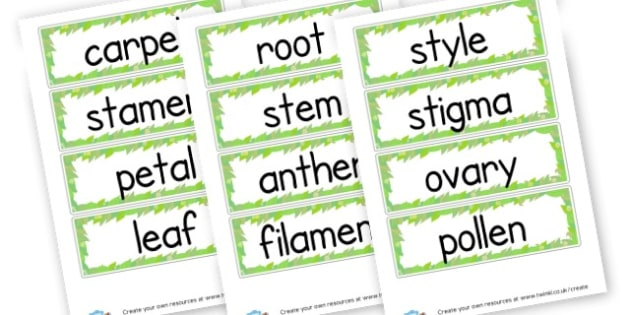 parts of a flower labels - Plants & Growth Primary Resources, flowers, grow, planting, garden