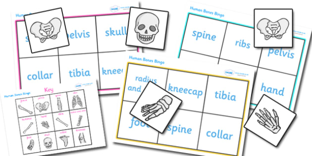 Bones of the Body Bingo - bones of the body bingo, bones, body, human body, human skeleton, bingo, game, activity, skull, hands, ribs, kneecap