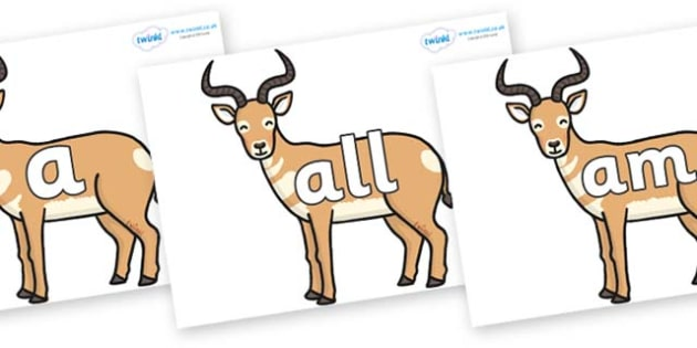 Foundation Stage 2 Keywords on Antelopes - FS2, CLL, keywords, Communication language and literacy,  Display, Key words, high frequency words, foundation stage literacy, DfES Letters and Sounds, Letters and Sounds, spelling