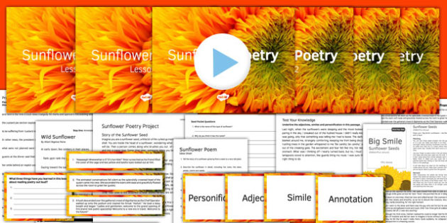 Sunflower Poetry Project Teaching Pack - sunflower, poetry, pack