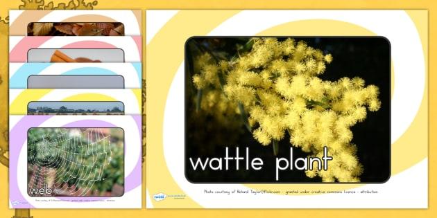 Autumn Display Photos - seasons, weather, season display, display