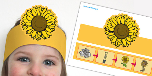 Sunflower Life Cycle Headband - sunflower, life cycle, role-play