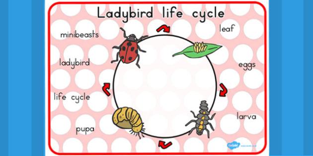 Ladybird Life Cycle Word Mat - visual aid, keywords, writing aid