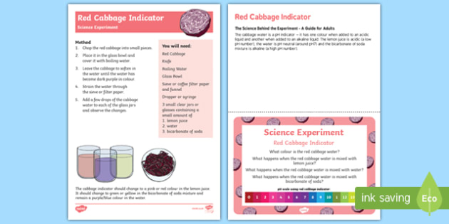 EYFS Red Cabbage Indicator Science Experiment and Prompt Card Pack