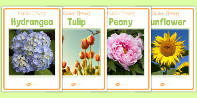 Garden Flower Photo Display Posters - flowers, flowers posters, flowers photo posters, flower photo posters, flower display posters, flower photos, flower
