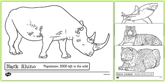 Endangered Animals Colouring Sheets - endangered, animals, colouring sheets, colouring, colour