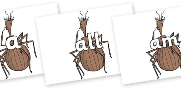 Foundation Stage 2 Keywords on Miss Spider to Support Teaching on James and the Giant Peach - FS2, CLL, keywords, Communication language and literacy,  Display, Key words, high frequency words, foundation stage literacy, DfES Letters and Sounds, Lett
