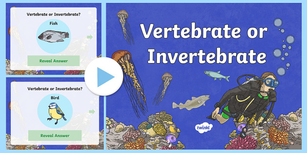 Vertebrate or Invertebrate PowerPoint - vertebrates, invertebrates, backbones, vertebrate or invertebrate quiz, vertebrate and invertebrate question game