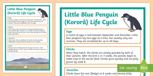Little Blue Penguin / Kororā Life Cycle Display Poster