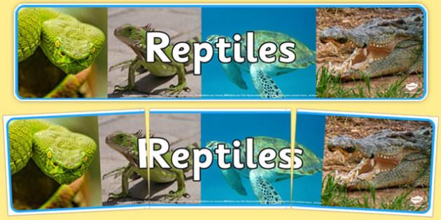 Reptiles Photo Display Banner - reptiles, display banner, photo, display, banner