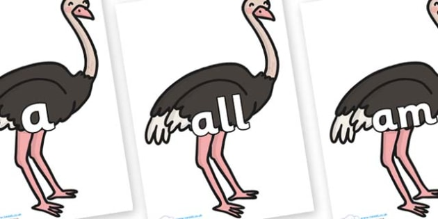 Foundation Stage 2 Keywords on Ostriches - FS2, CLL, keywords, Communication language and literacy,  Display, Key words, high frequency words, foundation stage literacy, DfES Letters and Sounds, Letters and Sounds, spelling