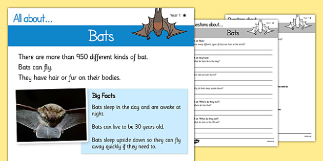 Year 1 Simple Bats Reading Comprehension - year 1, simple, bats, reading comprehension, reading, read, comprehension
