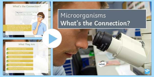 Microorganisms What's the Connection?