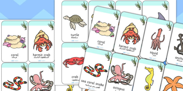 بطاقات تعليمية عن تحت البحر إنجليزي عربي