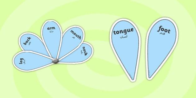 EAL My Body with English Word Fans Arabic Translation - arabic