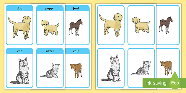 Animals And Their Young Matching Cards - animals, animal, young, animal babies, animal children, puppy, kitten, foal, dog, cat, horse