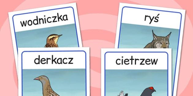 Plakaty ze zwierzetami po polsku - szkola podstawowa , Polish