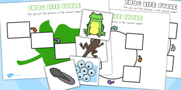 Frog Lifecycle Worksheets - life cycle, life cycles, minibeasts