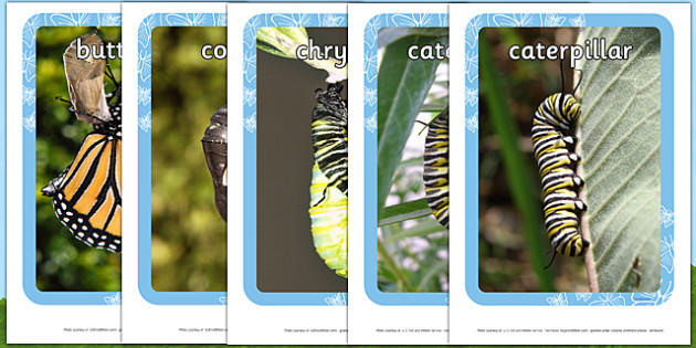 Life Cycle of a Butterfly Display Banner - Butterfuly, life cycle, lifecycle, display, photo, display Photos, display, photos, caterpillar, egg, knowledge and understanding of the world, investigation, living things