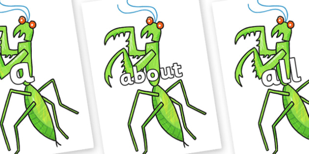 100 High Frequency Words on Praying Mantis to Support Teaching on The Bad Tempered Ladybird - High frequency words, hfw, DfES Letters and Sounds, Letters and Sounds, display words