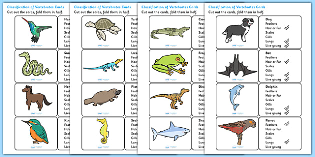 Classification of Vertebrates Cards - vertebrates, different types of vertebrate, classifying vertebrates, vertebrate characteristics cards, animals, ks2