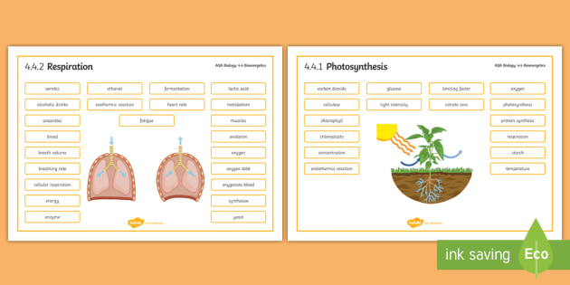 AQA Biology 4.4 Bioenergetics Word Mat - Word Mat, biology, gcse, aqa, bioenergetics, respiration, photosynthesis, energy, aerobic, anaerobic