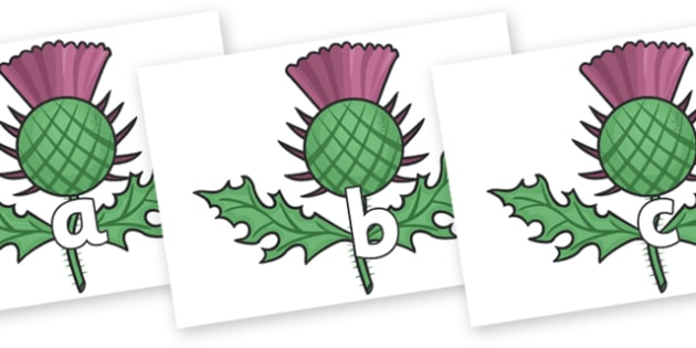 Phase 2 Phonemes on Scottish Thistles - Phonemes, phoneme, Phase 2, Phase two, Foundation, Literacy, Letters and Sounds, DfES, display