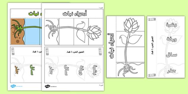 قالب وسيلة بصرية لأجزاء النبات - أجزائ النبات، وسائل تعليمية