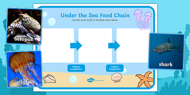 Under the Sea Food Chain Sorting Activity - under the sea, under the sea food chain, food chain, under the sea food chain sorting, sea creature food chain