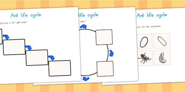 Ant Life Cycle Worksheets - life cycles, minibeasts, lifecycle