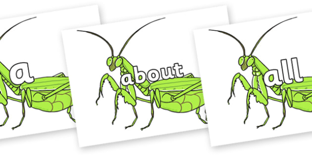 100 High Frequency Words on Praying Mantis - High frequency words, hfw, DfES Letters and Sounds, Letters and Sounds, display words