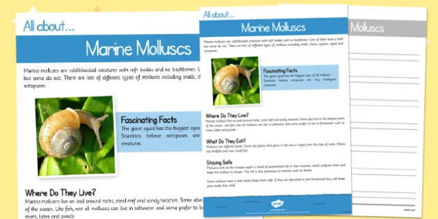 Marine Molluscs Differentiated Reading Comprehension Activity