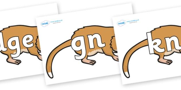 Silent Letters on Hamsters - Silent Letters, silent letter, letter blend, consonant, consonants, digraph, trigraph, A-Z letters, literacy, alphabet, letters, alternative sounds