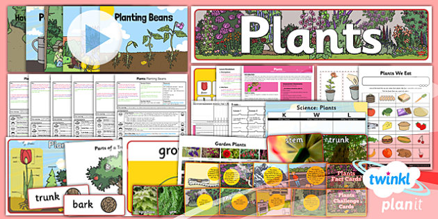 PlanIt - Science Year 1 - Plants Unit Pack - planit, science, year 1