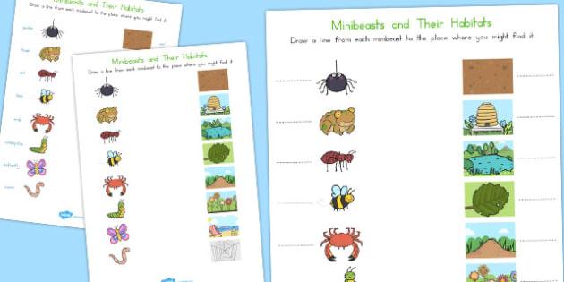 Minibeast and Their Habitats Worksheet - australia, minibeast