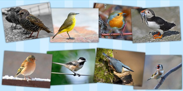 Birds Photo Pack - Birds, Photo, Pack, Wings, Photos, Photographs