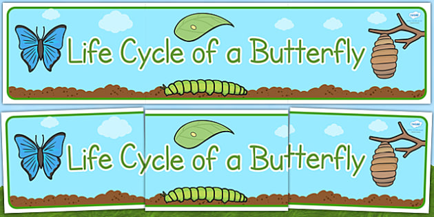 Life Cycle of a Butterfly Display Banner - Butterfuly, life cycle, lifecycle, display, banner, poster, caterpillar, egg, knowledge and understanding of the world, investigation, living things