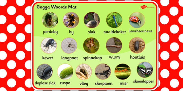 Afrikaans Minibeasts Photo Word Mat - afrikaans, minibeast, photo