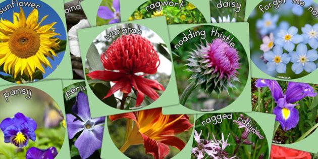 Flowers Display Photo Cut Outs - australia, display, photo, cut