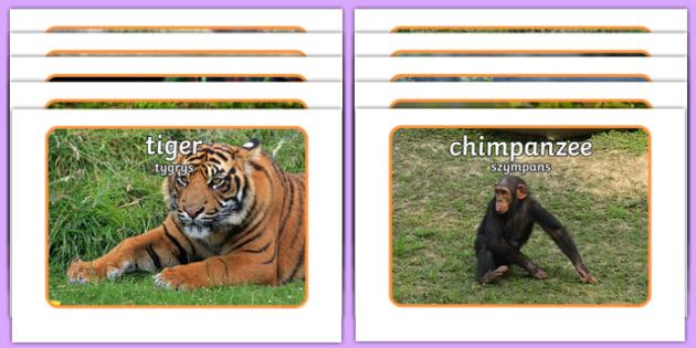 Jungle Display Photos Polish Translation - polish, Jungle, Rainforest, Display Posters, photo, display, photos, vines, A4, display, forest, ecosystem, rain, humid, parrot, monkey, gorilla