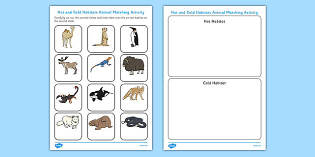 Hot and Cold Habitats Animal Sorting Worksheet - hot, cold, habitats, animal, sorting, worksheet