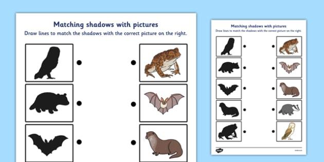 Wild Nocturnal Animals Shadow Matching Worksheet - wild, nocturnal, animals, shadow, matching, worksheet