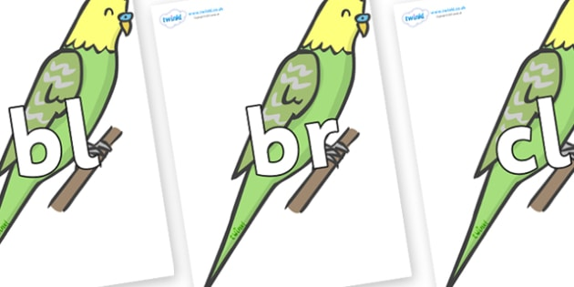 Initial Letter Blends on Budgies - Initial Letters, initial letter, letter blend, letter blends, consonant, consonants, digraph, trigraph, literacy, alphabet, letters, foundation stage literacy