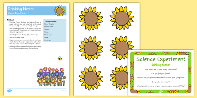Drinking Nectar Science Experiment and Prompt Card Pack - Butterfly, minibeasts, minibeast, flowers, flower