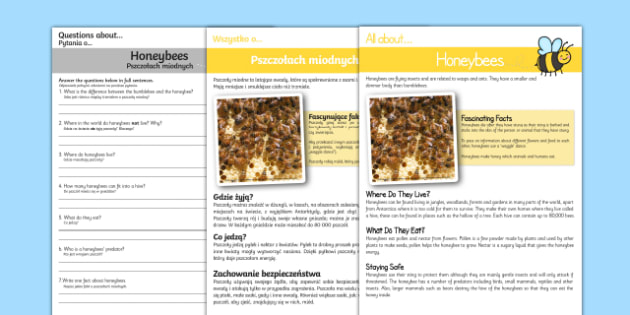Honeybee Reading Comprehension English/Polish