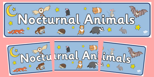 Nocturnal Animals Display Banner - Animals, animal, nocturnal, class, class banner, class display, classroom banner, classroom areas signs, areas, display banner, display