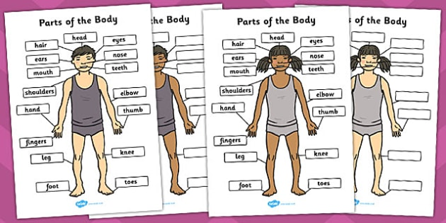 Parts of the Body Pack - parts, body, pack, label, bodies, limbs