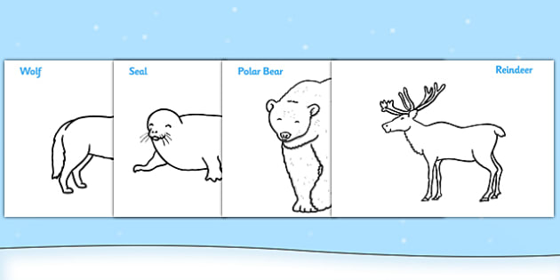 Polar Animals Colouring Sheets - Arctic, winter, xmas, colouring, fine motor skills, poster, worksheet, fox, hare, polar bear, whale, penguin, huskey, snow, winter, frost, cold, ice, hat, gloves
